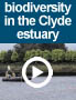 Biodiversity in the Clyde estuary